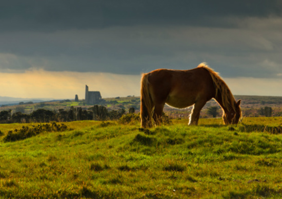Bodmin Moor in Poldark Country