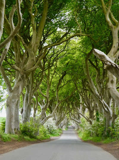 Discover Northern Ireland's Dark Hedges