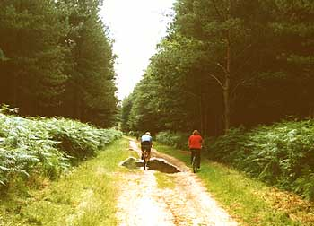 Wonderful cycle trails through the forest