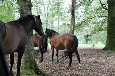 New Forest cottage breaks with outdoor activities