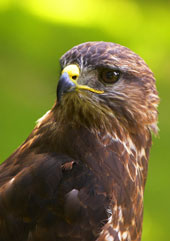 self catering holidays bird watching scotland