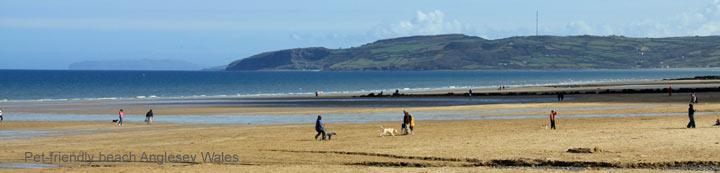 dog friendly cottages wales