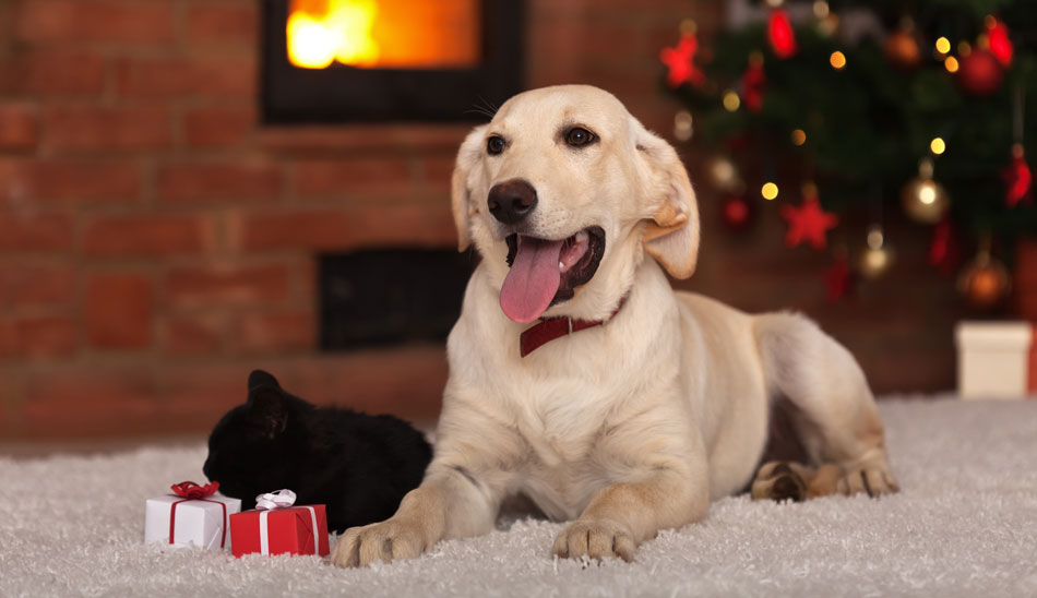 dogs welcome christmas cottages