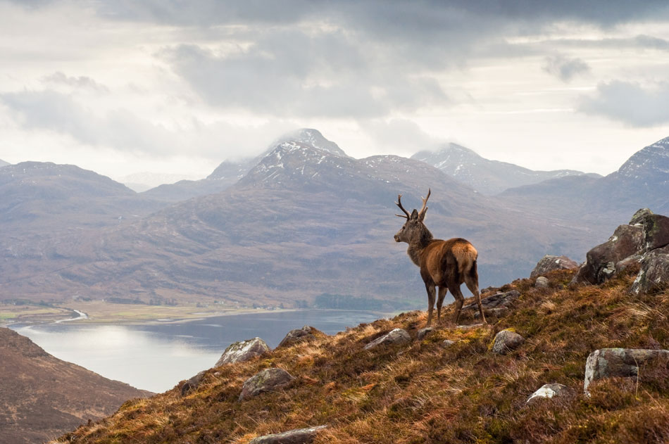 dogs welcome holiday cottages in scotland