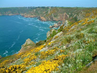 Guernsey holiday cottages