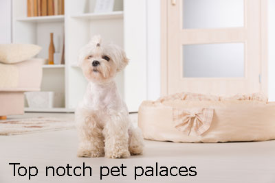 High quality pets cottages