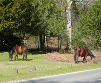 log cabins for self catering holidays in the New Forest