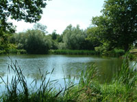 selfcatering surrey