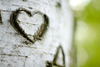 Romantic heart on tree
