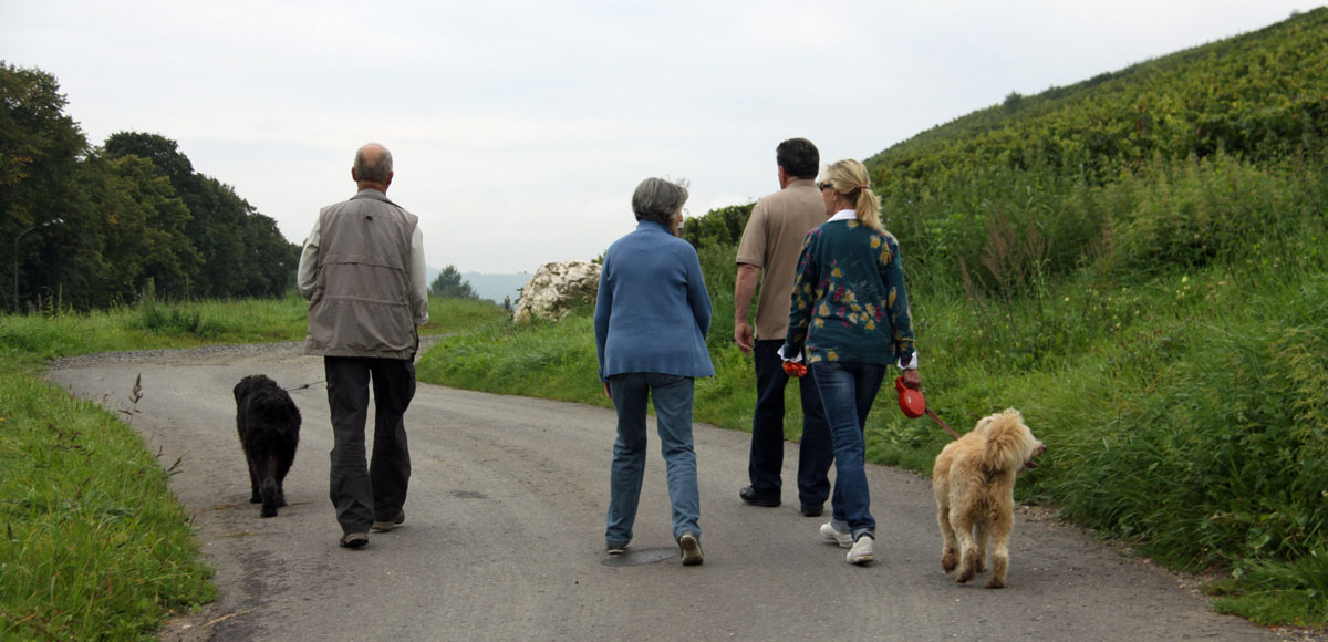 Cheap Dog Friendly Accommodation In North Wales