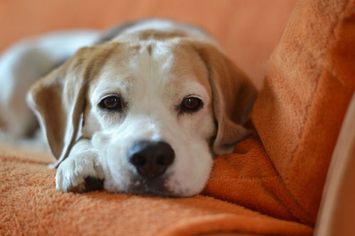 Dog Friendly Cottages Chester
