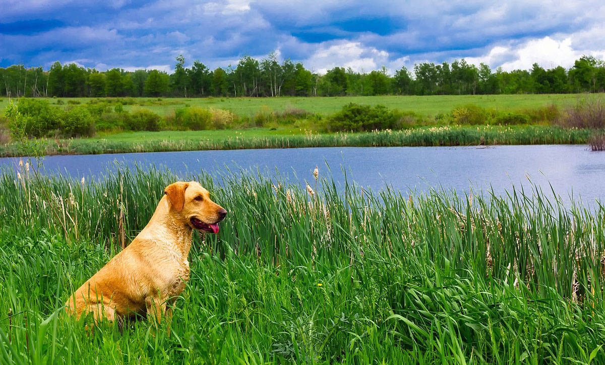 dog friendly self-catering lodges in scotland