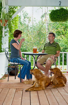 dog friendly pine lodge holidays national aprks